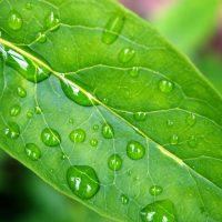 plant-leaf-1361447