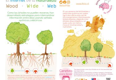 INFO 1 Wood Wide Web WEB